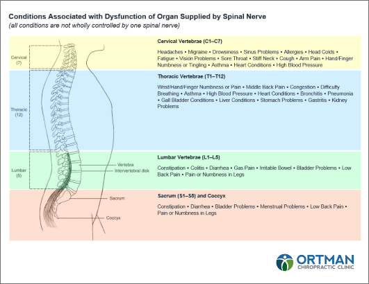 Ortman Clinic Spinal Nerve Chart